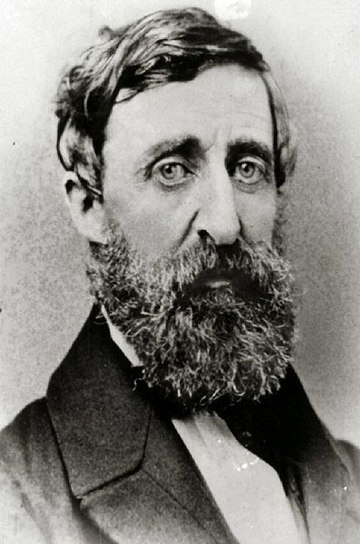 Thoreau And Civil Disobedience  Constitutional Rights Foundation Henry David Thoreau  Wikimedia Commons Independence Day Essay In English also Poverty Essay Thesis Thesis Support Essay